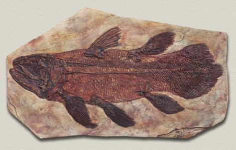coelacantfoss
