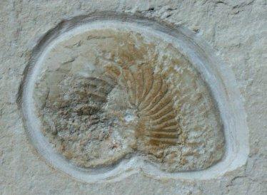 fossilmall.com